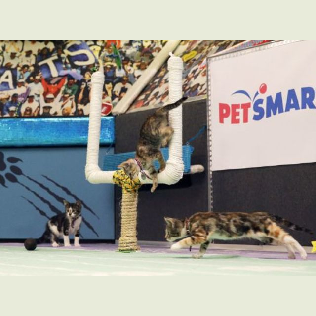 Big game inexperience will turn Panthers into kittens
