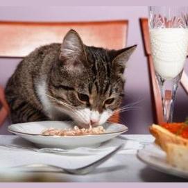 Dinner At A Nice Restaurant
