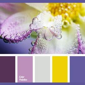 Purple/Gold