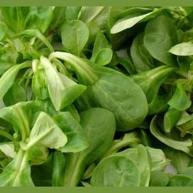 rampion lettuce