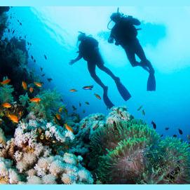 Incredible diving