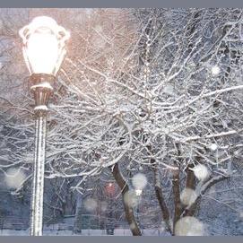 A peaceful snowfall