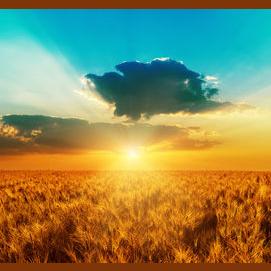 A sunny meadow