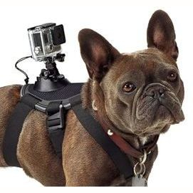 With a GoPro