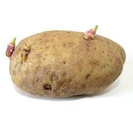 With a potato