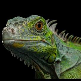 Reptile/Amphibian