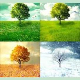 """The Four Seasons""- Vivaldi"