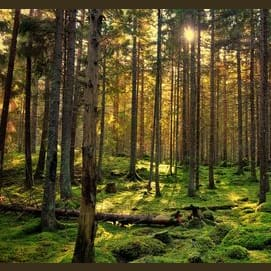 a forest or the woods