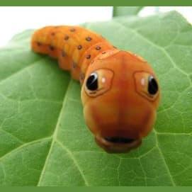 Caterpillar/Butterfly