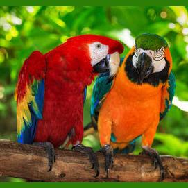 Beautiful, colorful Parrots!