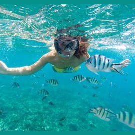 Snorkelling at the beach