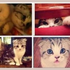 Meredith for the win!