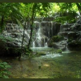 Serene Jungle