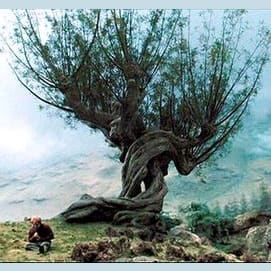 Under the Whomping Willow