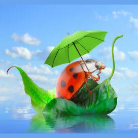 Traveling ladybug