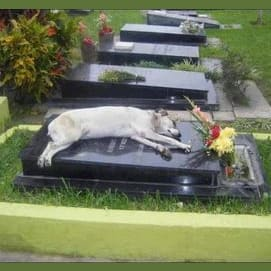 A dog stays on the grave of his deceased owner. He was there for hours