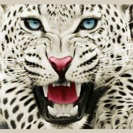 Fierce Jaguar