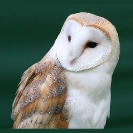 Whip-Smart Owl