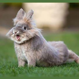 This Crazy Bunny