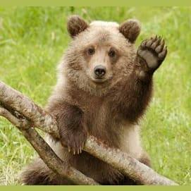 Huggable Bear