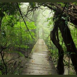 On a bridge in the jungle