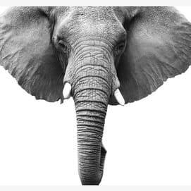 An elephant's head