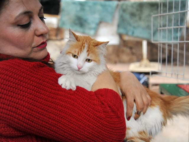The fact that Baris will live in a publishing house whose name is 'Red Cat' is the right ending for his own story. Baris came to Kirmizi Kedi and I hope peace will also come to Syria and Middle East.
