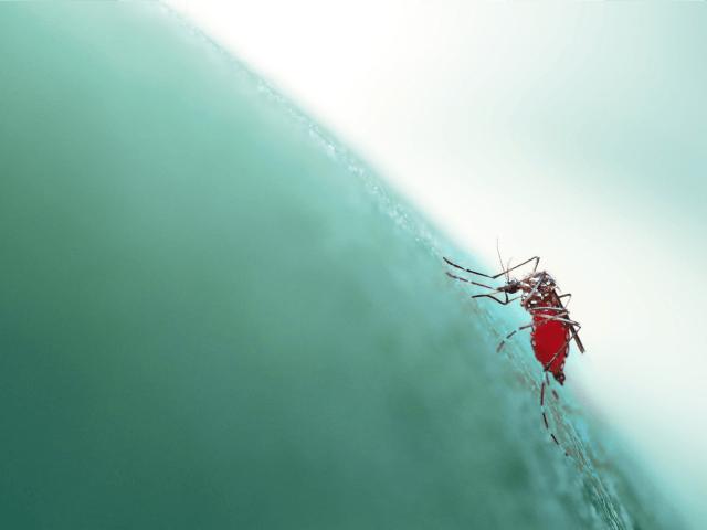 Los escenarios de cambio climático más extremos producen grandes poblaciones expuestas al mosquito  Aedes aegypti .