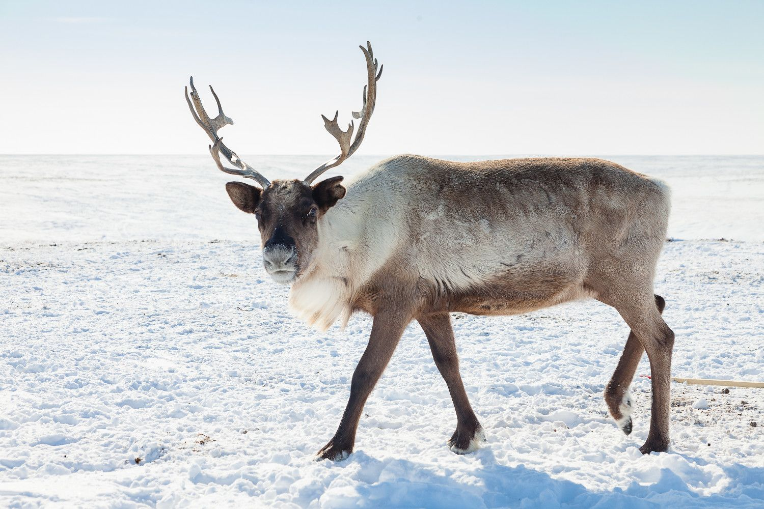 Can You Name These Beautiful Weird and Wonderful Winter Beasts?