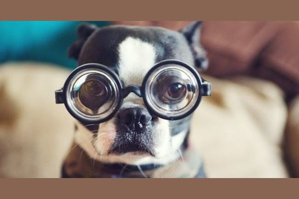 The Toughest Quot Dog Quot Quiz That You Will Ever Come Across