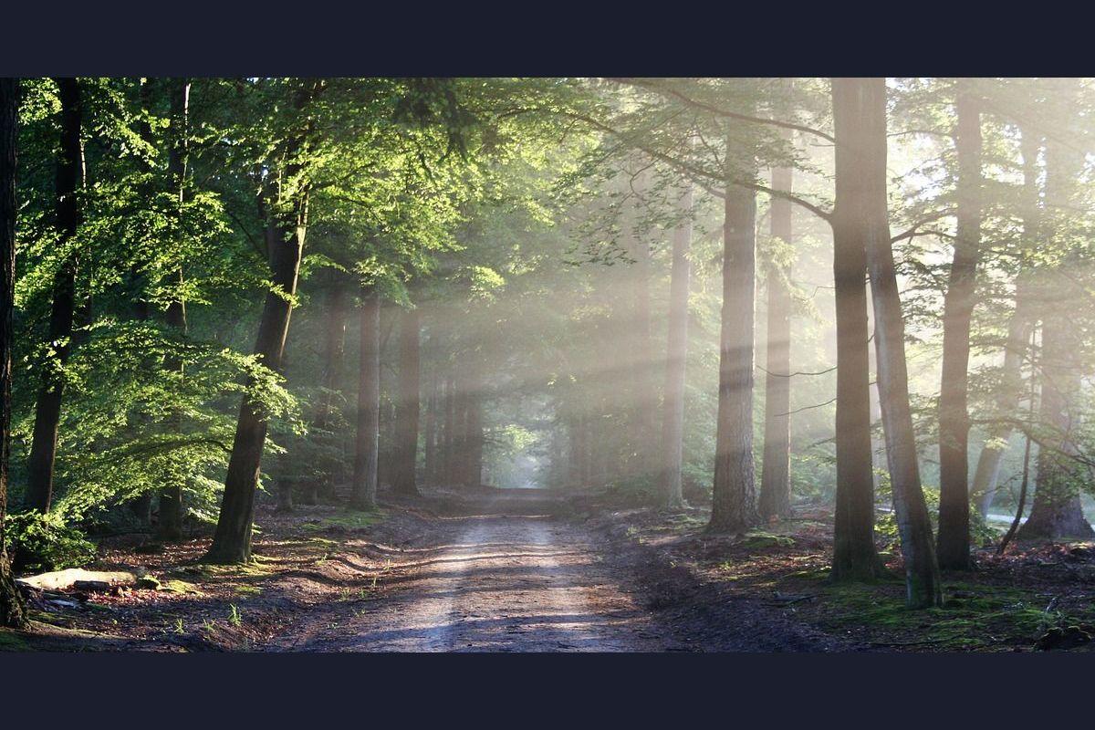 Тест: Как выжить в лесу?