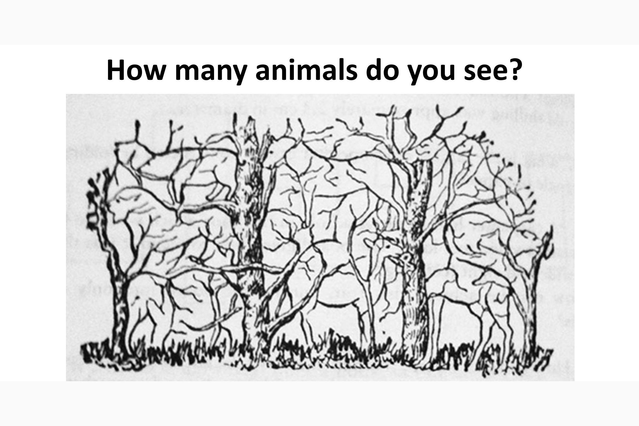 администрации сколько животных видишь на картинке ответ кольпоскопы имеют комплекте