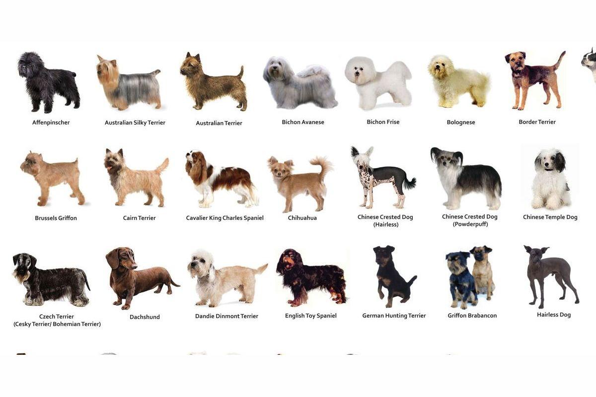 Определить породу у собаки по картинки