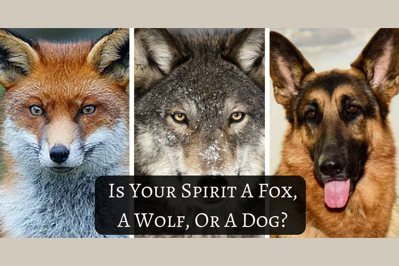 Is Your Spirit A Fox, A Wolf, or a Dog?