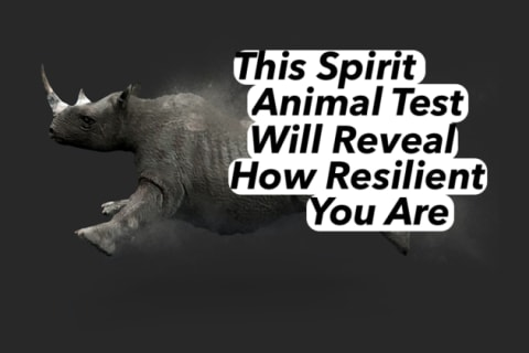 This Spirit Animal Test Will Determine How Resilient You Are