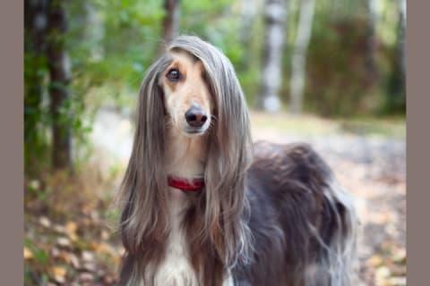All Dogs Breeds Goldenacresdogs Com