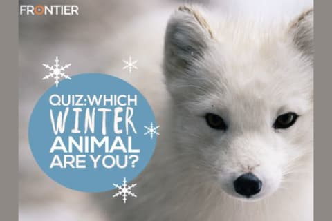 Which Winter Animal Are You