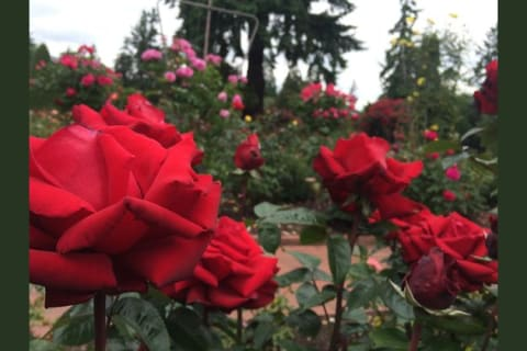 Rose City Romance: What's My Style?
