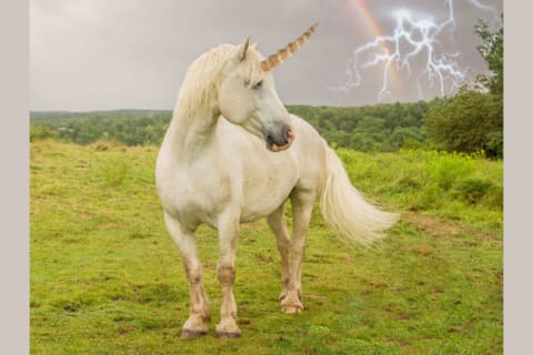 What is Your Mythological Spirit Creature?