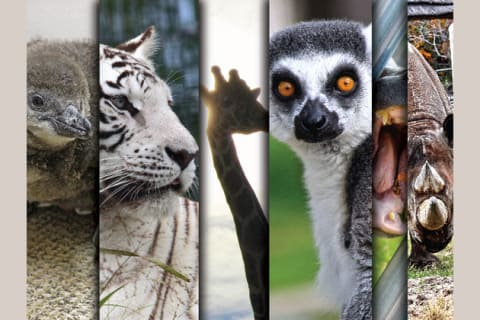 Find out which animal from Tanganyika Wildlife Park you are most like!