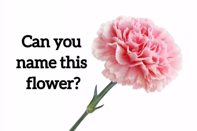We Bet You Cant Name These 20 Most Common Flowers Just By Looking