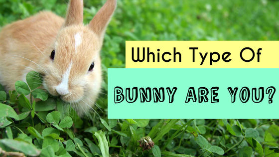 Easter is just around the corner, and in the spirit of this holiday, lets find out which bunny you really are.