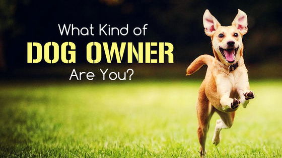 """Have you ever wondered if you were a """"good enough"""" dog trainer? Well the truth is, there is really no """"right"""" or """"wrong"""" way to train your dog! However, the way you treat and handle your dog reflects upon you as a person. Check out right now what kind of dog owner you are, and what your strengths and weaknesses are in the dog world!"""