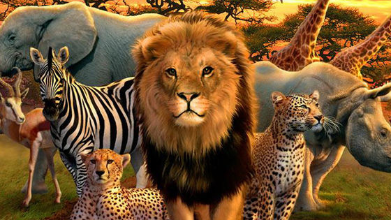 Have you ever looked at the beautiful animals of Africa in awe? Haven't you ever wished to be one of those animals of such beauty and grace? Well now you can with a little imagination and taking this quiz to find out what African Animal you truly are inside! Come with me on a magical tour around Africa (With a lots of role-play and fun interactive choices,) to uncover your true self!