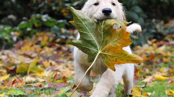 Looking to add a fluffy friend to your family? Just want to shamelessly click through pics of the most adorable autumnal puppies to have ever jumped into piles of leaves? You're in the right place!