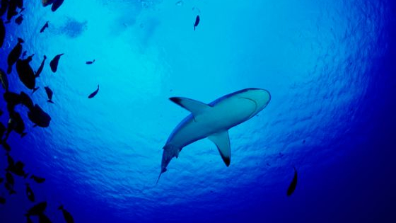 Take this quiz to find out which species of shark you are!