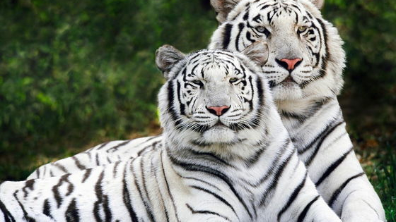 There are now over 16,000 animals / plants threatened with extinction in the world. Find out which one you are, so you can do something about it.   Visit http://lmfaoanimals.com for more animal quizzes.