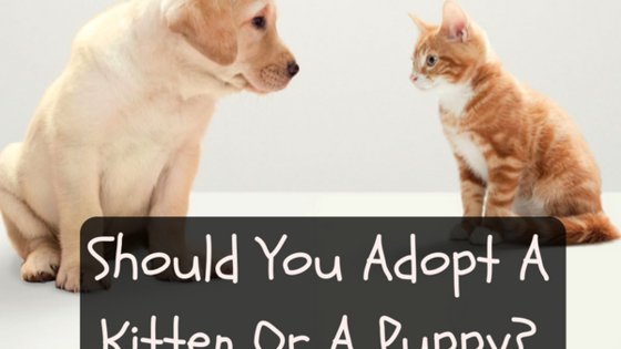 What fur baby will be yours!?