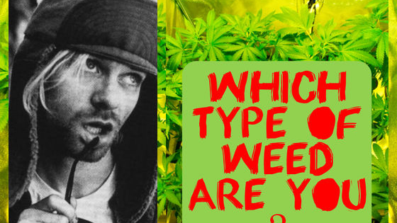 Yes, you read it right!  With such growth in Cannabis legalization, you too should know what is out there and which one could match your personality.  So even if you are not a fan of the all mighty Green, DO try this quiz.  You May surprise yourself!!
