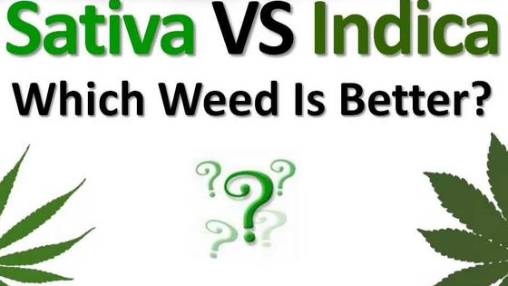 Indica, sativa or hybirds?